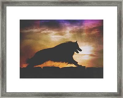 Belgian Sheepdog Art 7 Framed Print