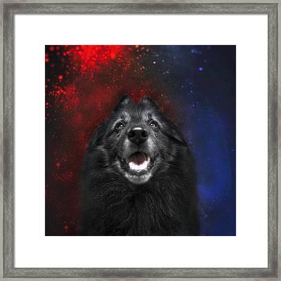 Belgian Sheepdog Artwork 16 Framed Print by Wolf Shadow Photography