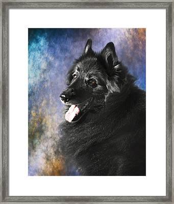 Belgian Sheepdog Portrait 12 Framed Print