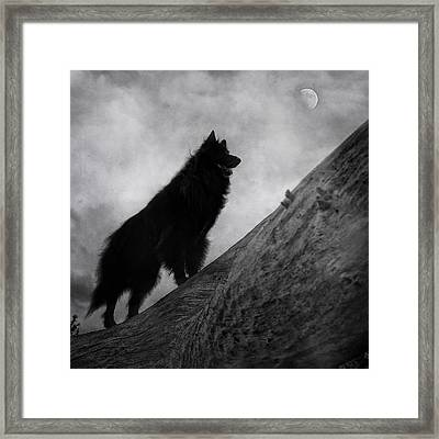 Belgian Shepherd Artwork 8 Framed Print