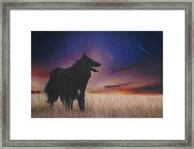 Belgian Shepherd Artwork14 Framed Print by Wolf Shadow Photography
