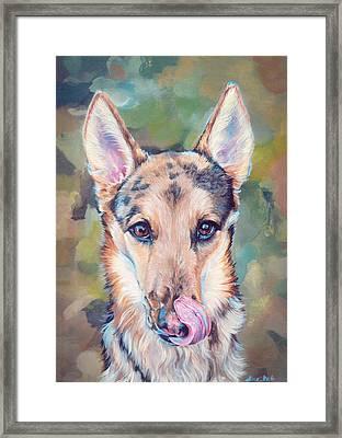 Belgian Shepherd Mix Framed Print