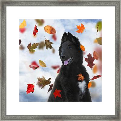 Belgian Shepherd Puppy In Autumn 2 Framed Print by Wolf Shadow  Photography