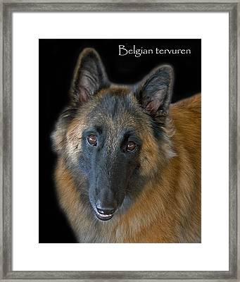 Belgian Tervuren Framed Print