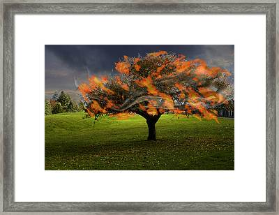 Believe In Miracles Framed Print