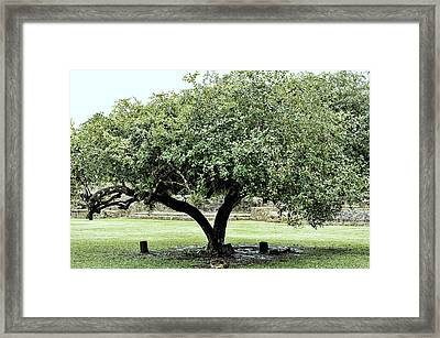 Belize Tree Framed Print