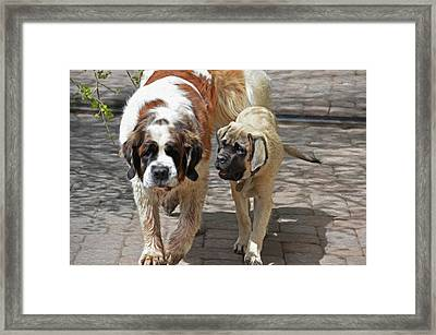 Bell And Maya Framed Print by Susie Fisher