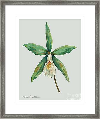 Bell Orchids Framed Print by Meridith Martens