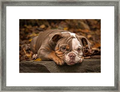 Bella 47 Framed Print
