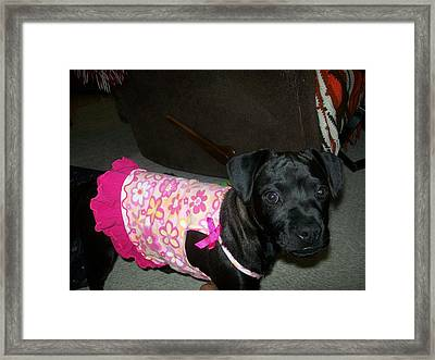 Bella In Swimsuit Framed Print by Jewel Hengen