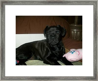 Bella Framed Print by Jewel Hengen