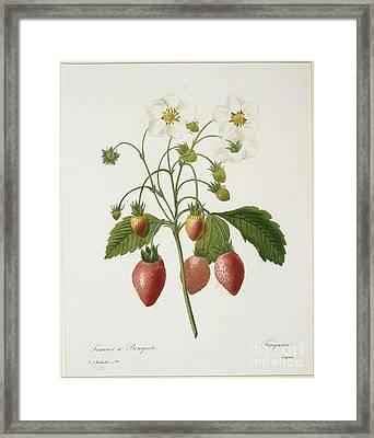 Belles Fleurs Framed Print
