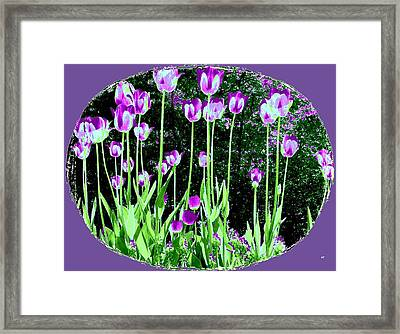 Belles Tulipes Au Printemps Framed Print by Will Borden