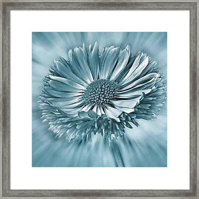 Bellis In Cyan  #flower #flowers Framed Print