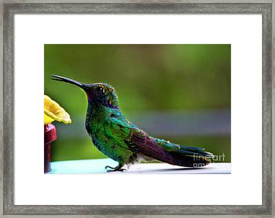 Belly Up To The Bar Framed Print by Al Bourassa