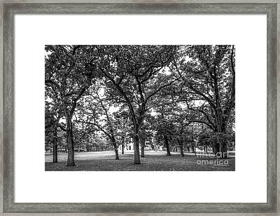 Beloit College Oak Grove Framed Print