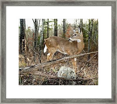 Beloved Tzav Framed Print by Bill Stephens