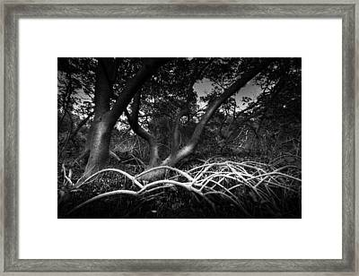 Below The Canopy Framed Print