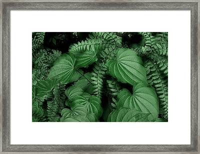 Below The Canopy Framed Print by Mike Eingle