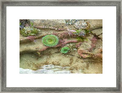 Below The Surface Framed Print by Kristina Rinell