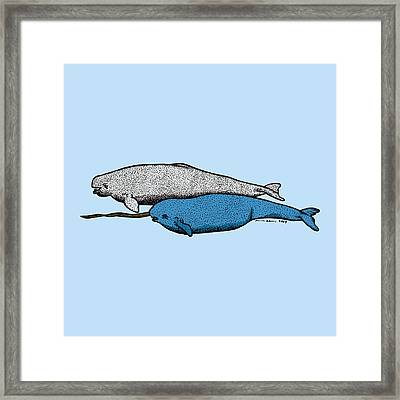 Beluga And Narwhal Whales Framed Print by Karl Addison