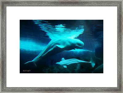 Framed Print featuring the digital art Belugas Of The Arctic by Rhonda Strickland