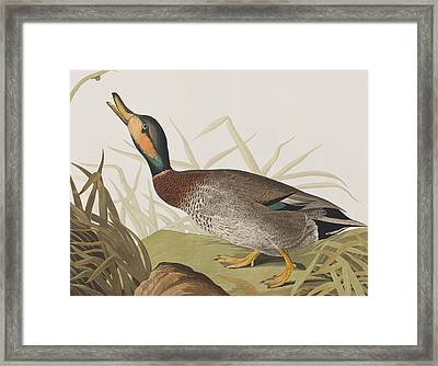 Bemaculated Duck Framed Print