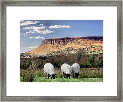Benbulben, Co. Sligo - Sheep Grazing At The Base Of The Mountain On A Sunny Spring Day Framed Print