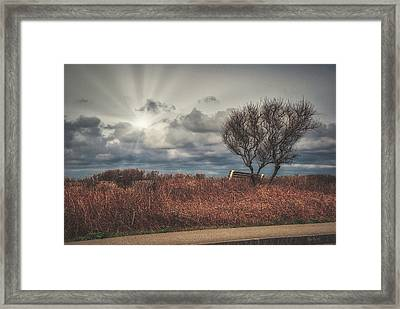 Bench And Tree Framed Print