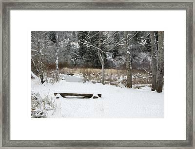 Bench At Beaver Pond Framed Print