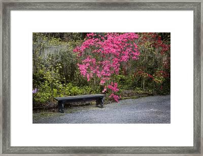 Bench In Azalea Garden Framed Print