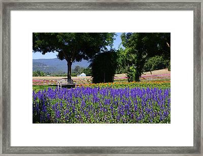 Bench In Flowers Framed Print by Jeff Lowe