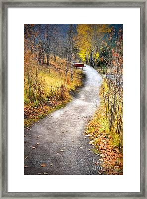 Bench On A Hill Framed Print by Tara Turner