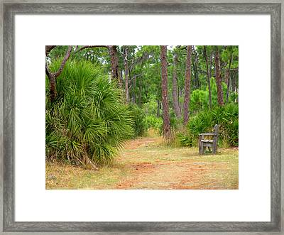 Bench On The Nature Walk Framed Print by Rosalie Scanlon