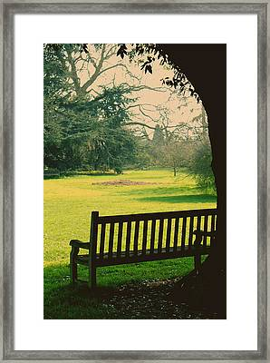 Bench Under A Tree Framed Print