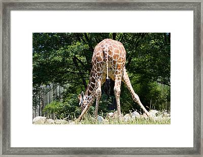 Bend And Stretch  Framed Print