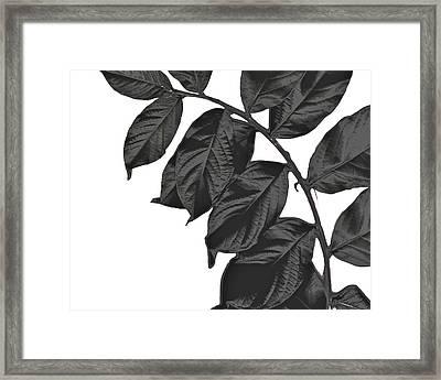 Bend Framed Print by Slade Roberts