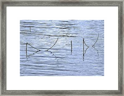 Bended Stems Of Water Horse Tails Framed Print