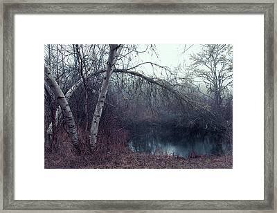 Framed Print featuring the photograph Bending Birch by Andrew Pacheco