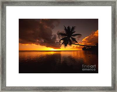 Bending Palm Framed Print by Ron Dahlquist - Printscapes