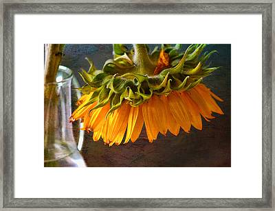 Framed Print featuring the photograph Bending  Sunflower by John Rivera