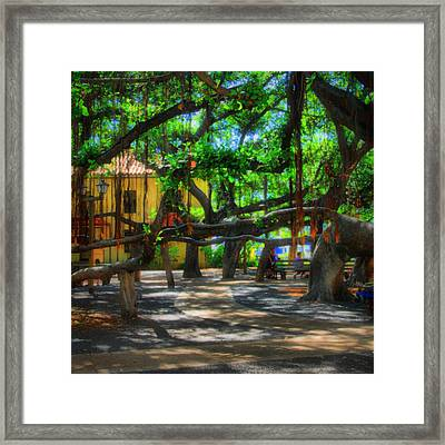 Beneath The Banyan Tree Framed Print