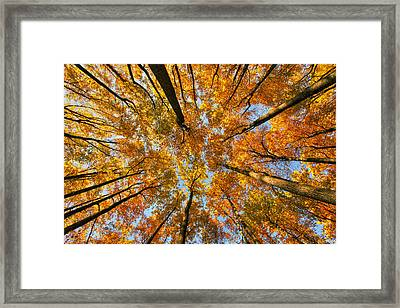 Beneath The Canopy Framed Print by Edward Kreis