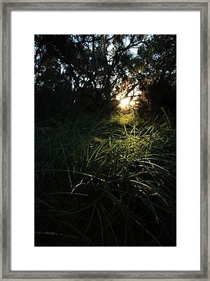 Beneath The Oaks Framed Print by Robin Street-Morris