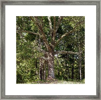 Beneath The Old Oak Tree  Framed Print