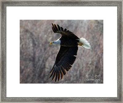 Beneath The Treetops Framed Print by Mike Dawson