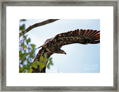 Beneath The Wings Of An Eagle  9038 Framed Print