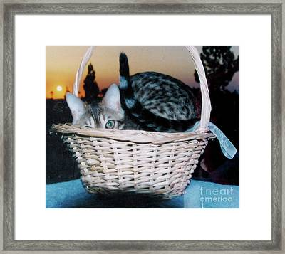 Framed Print featuring the photograph Bengal Cat At Sunset by Phyllis Kaltenbach