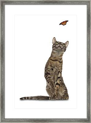 Bengal Cat With Butterfly Framed Print