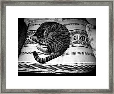 Bengal Catnap Framed Print by Fareeha Khawaja